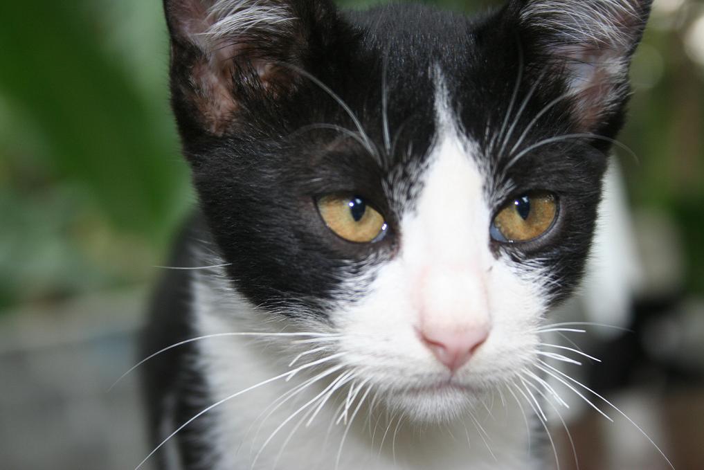 Tip Menjadikan Kucing Kampung Sekelas Kucing Persia Hariyanto